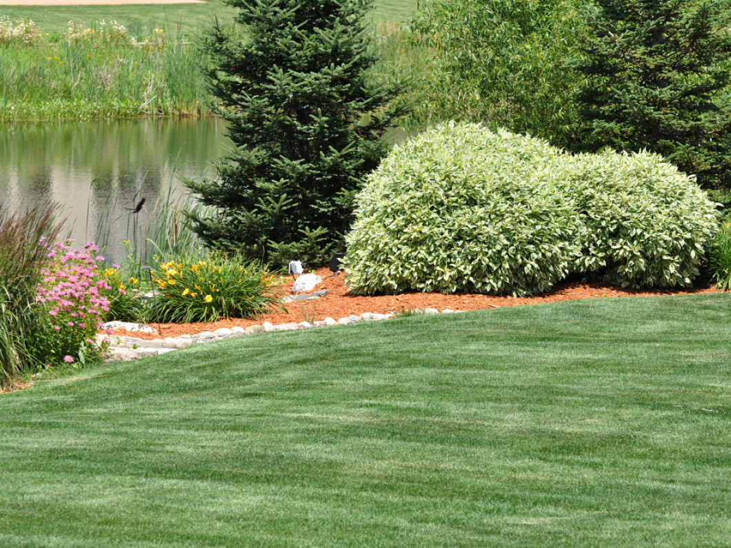 Arrange for regular lawn care services at your home